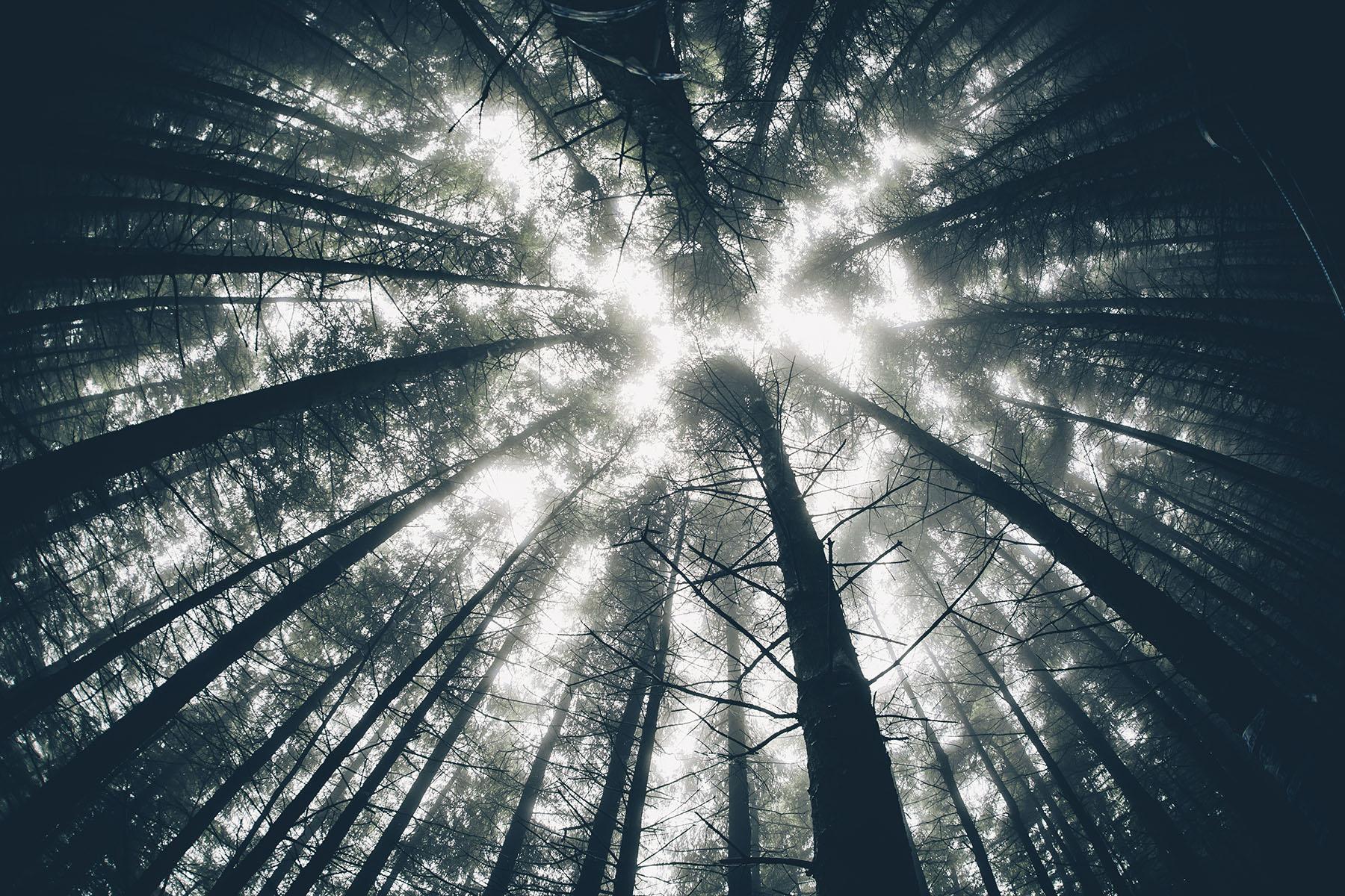 Das Wetter wollte aber nicht so recht mitspielen, was den Wald sehr
