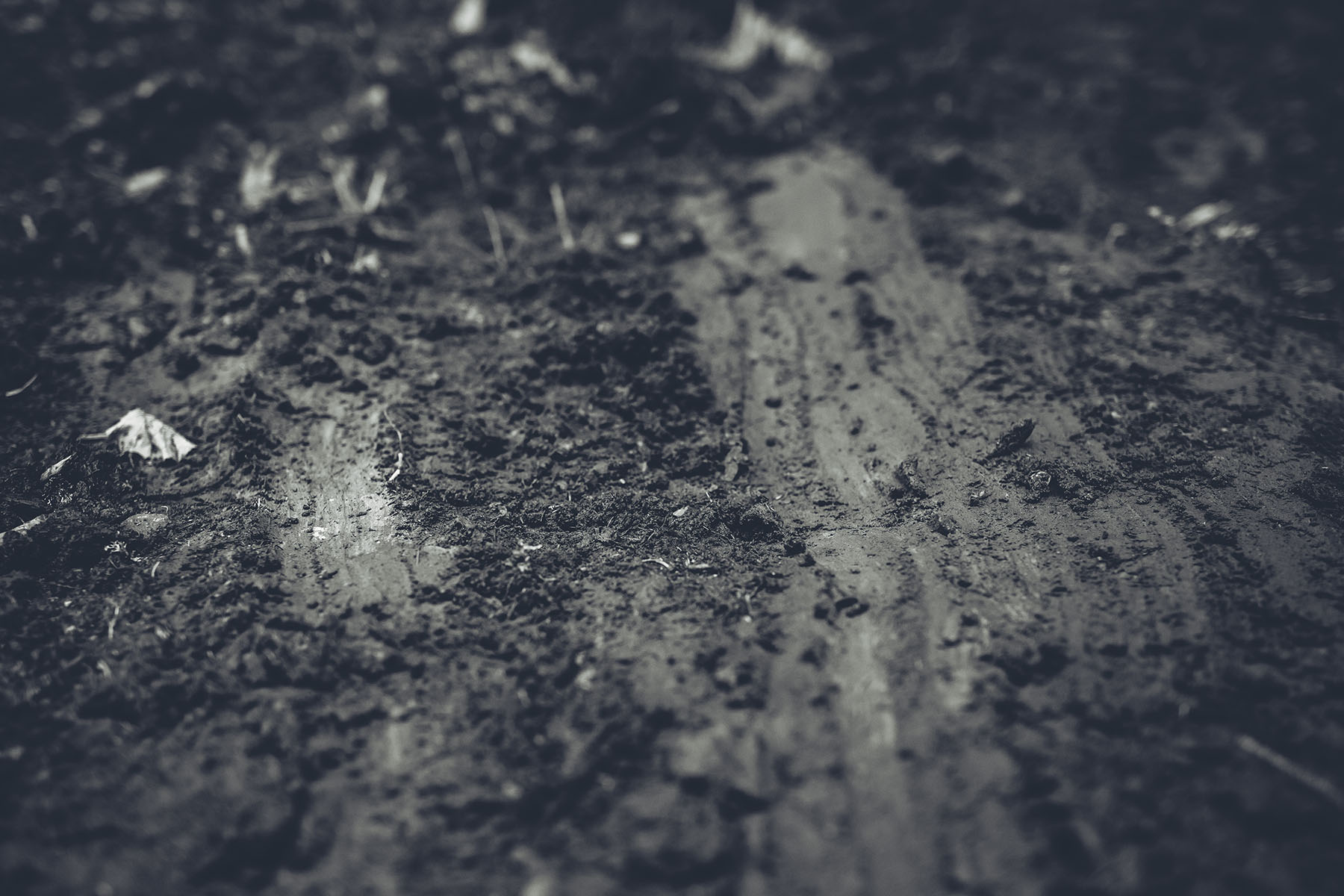 Im Wald ist der Boden matschig und rutschig! Sollte es regnen, sieht's hier auch nochmal anders aus. Aber spannend wird es alle mal und die Fahrer sind froh, über eine bisschen mehr