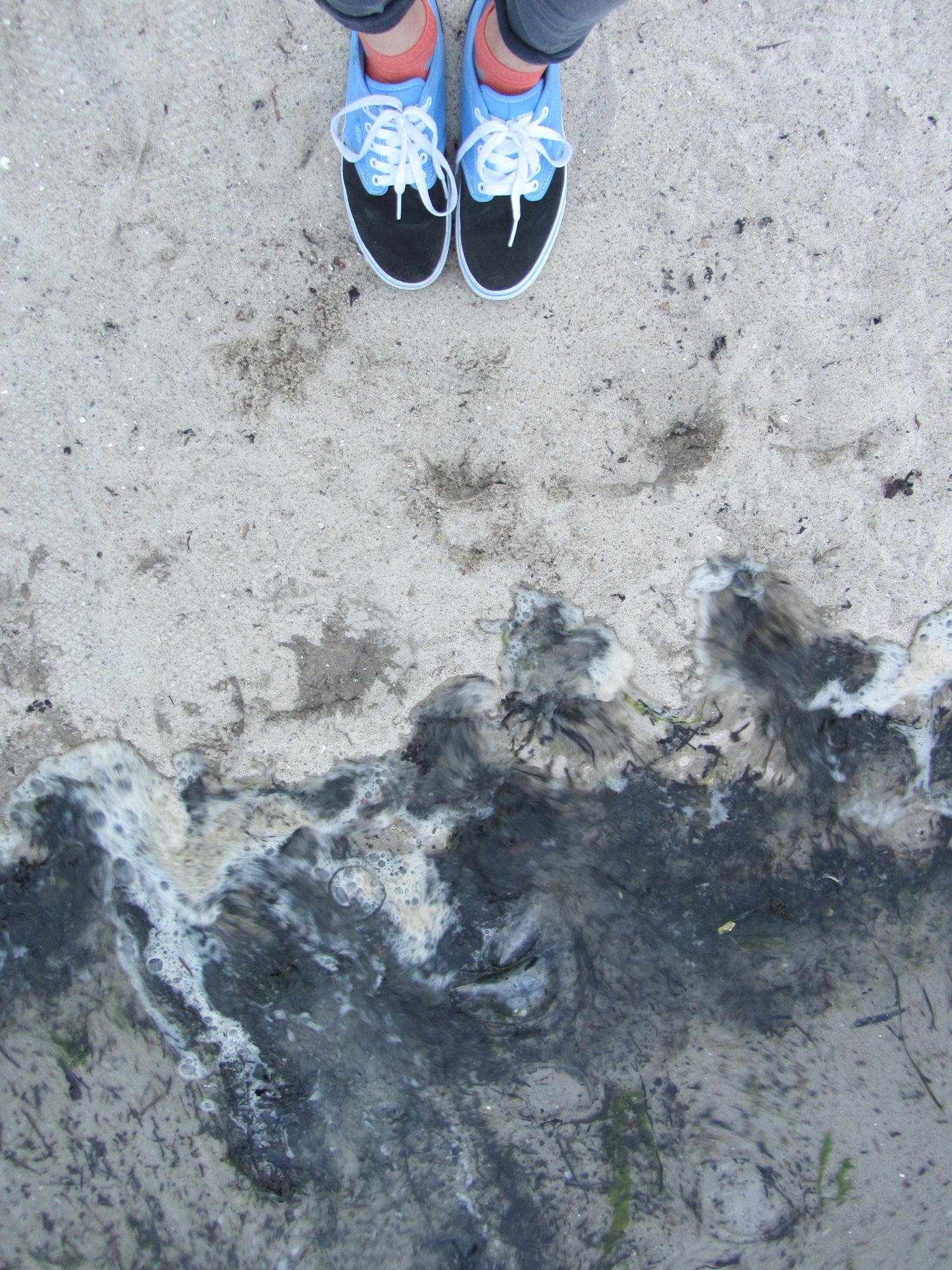 Abends machten wir einen kleinen Ausflug zum Strand, wer entdeckt die Quallen? Die machen die Ostsee immer etwas gruselig, wie ich finde. ©Jana Zoricic