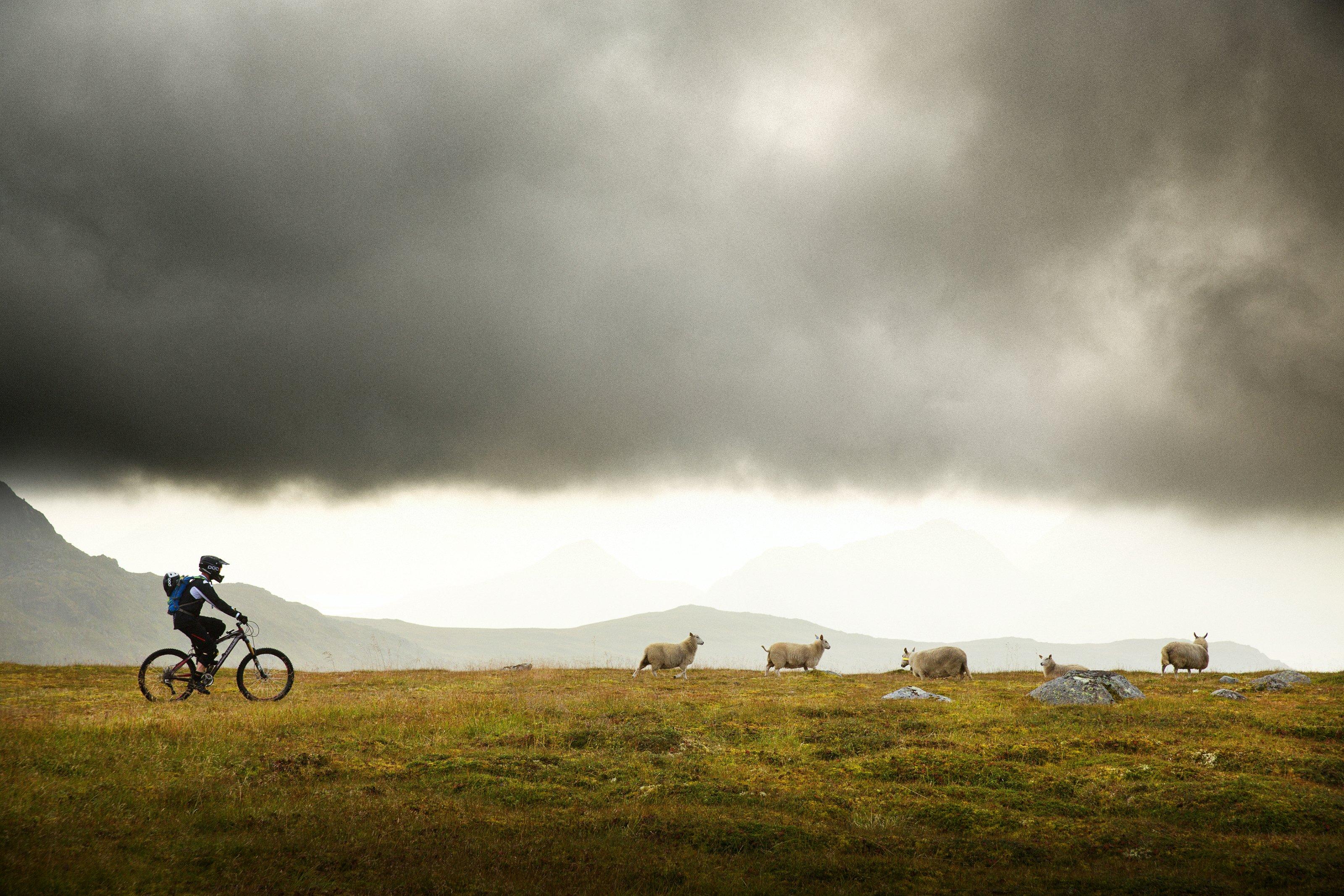 Seltene Begegnung - am ehesten mit den Schafen der Inseln, Foto: Red Bull