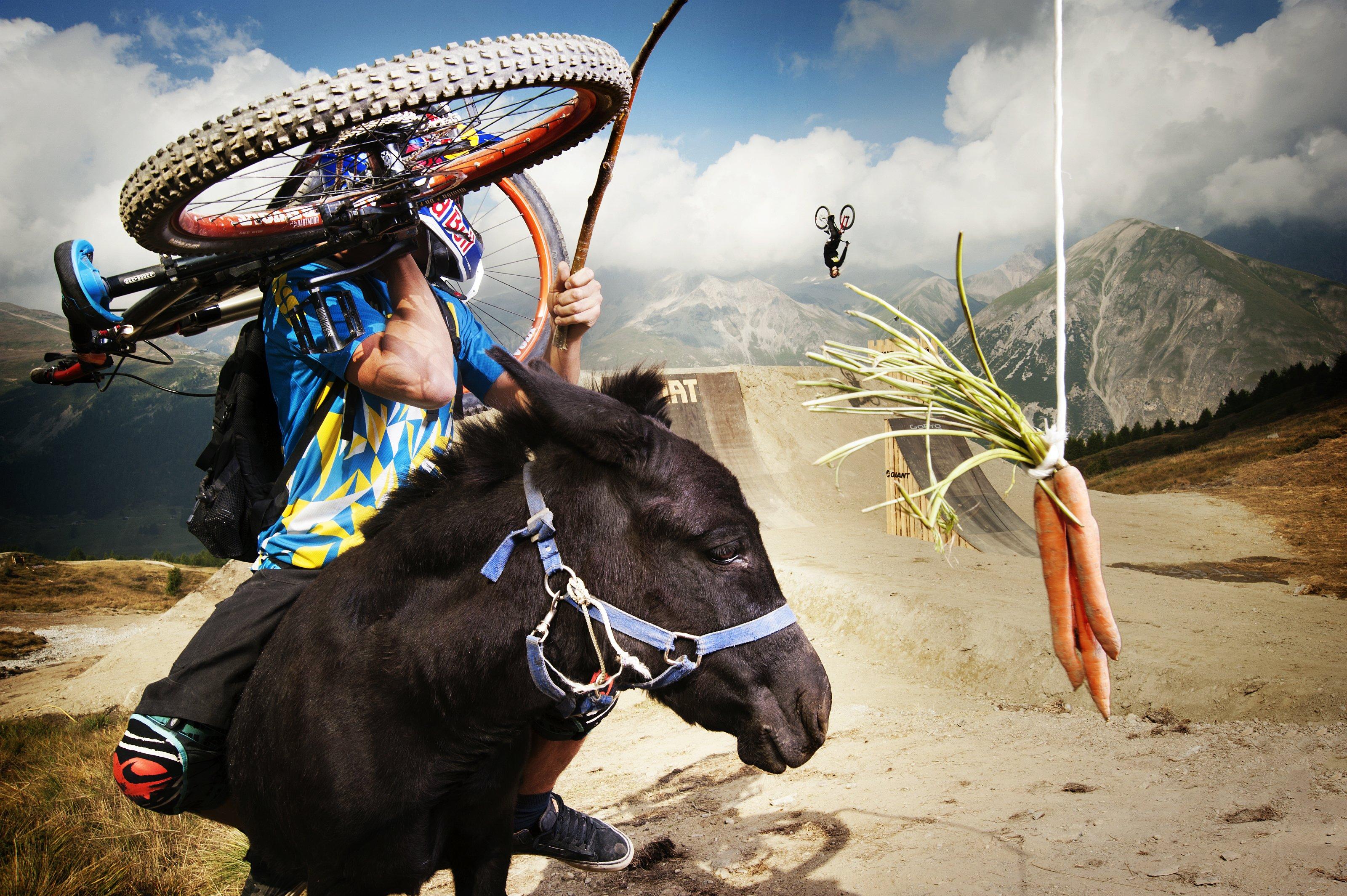 Ein Esel, drei Möhren und Szymon Godziek in Livigno; Foto: Red Bull