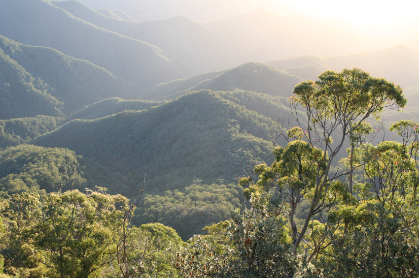 Rainforest mountain ridges at dawn, New South Wales, Australia. Photo: iStock