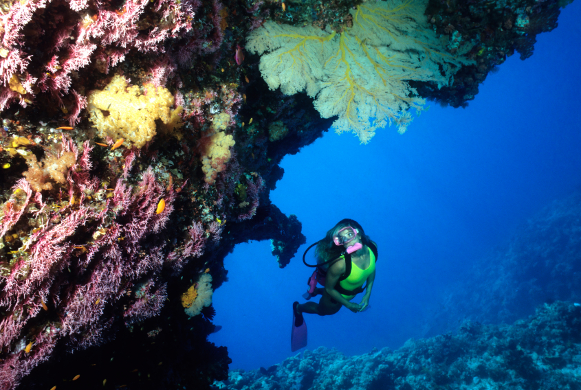 Diving around the Great Barrier Reef on an Australian gap year... Photo: iStock