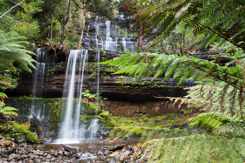Australia Tasmania Mt Field national park Russell cascade water falls surrounded by green fern trees Photo: iStock
