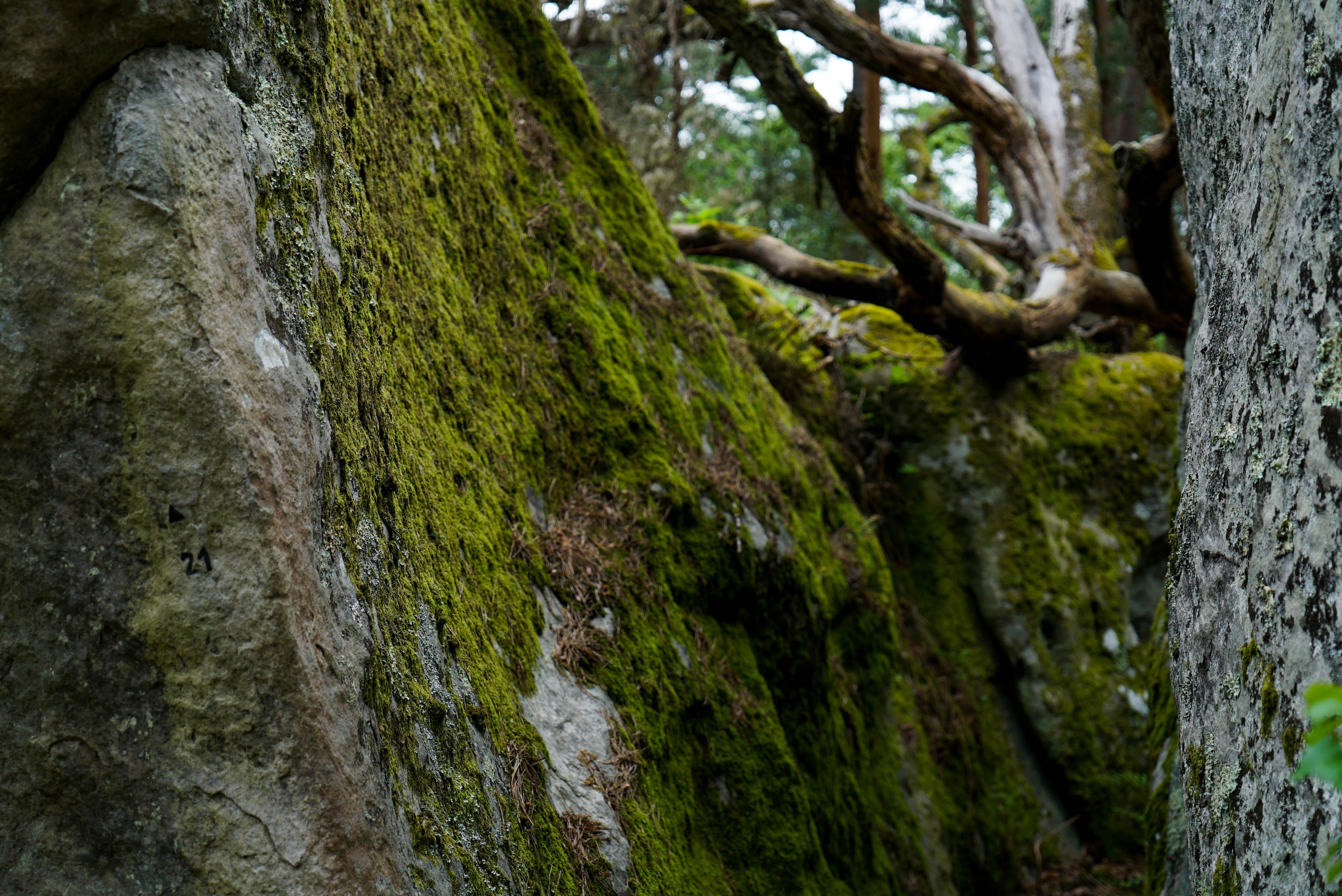 fontainbleau climbing 2016 mike brindley-114