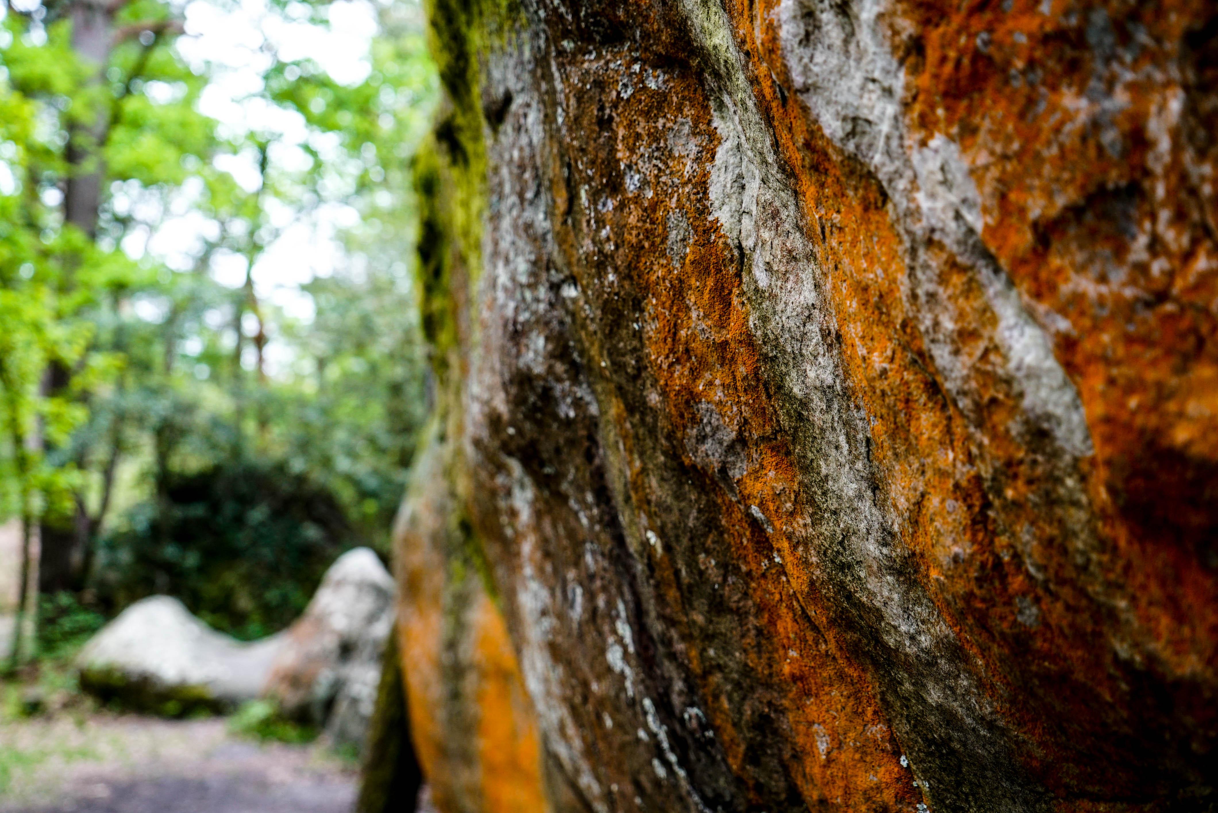 fontainbleau climbing 2016 mike brindley-117