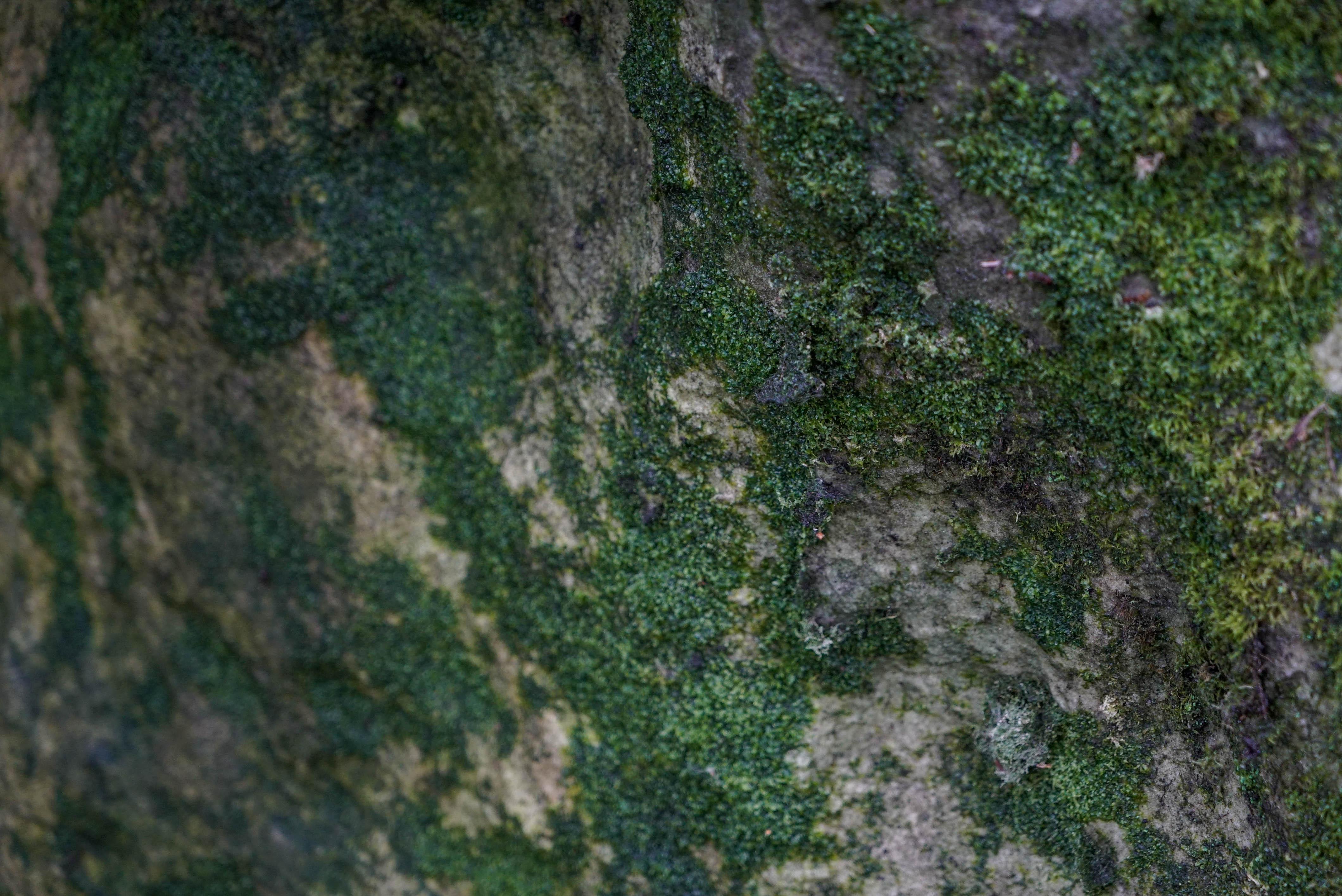 fontainbleau climbing 2016 mike brindley-17