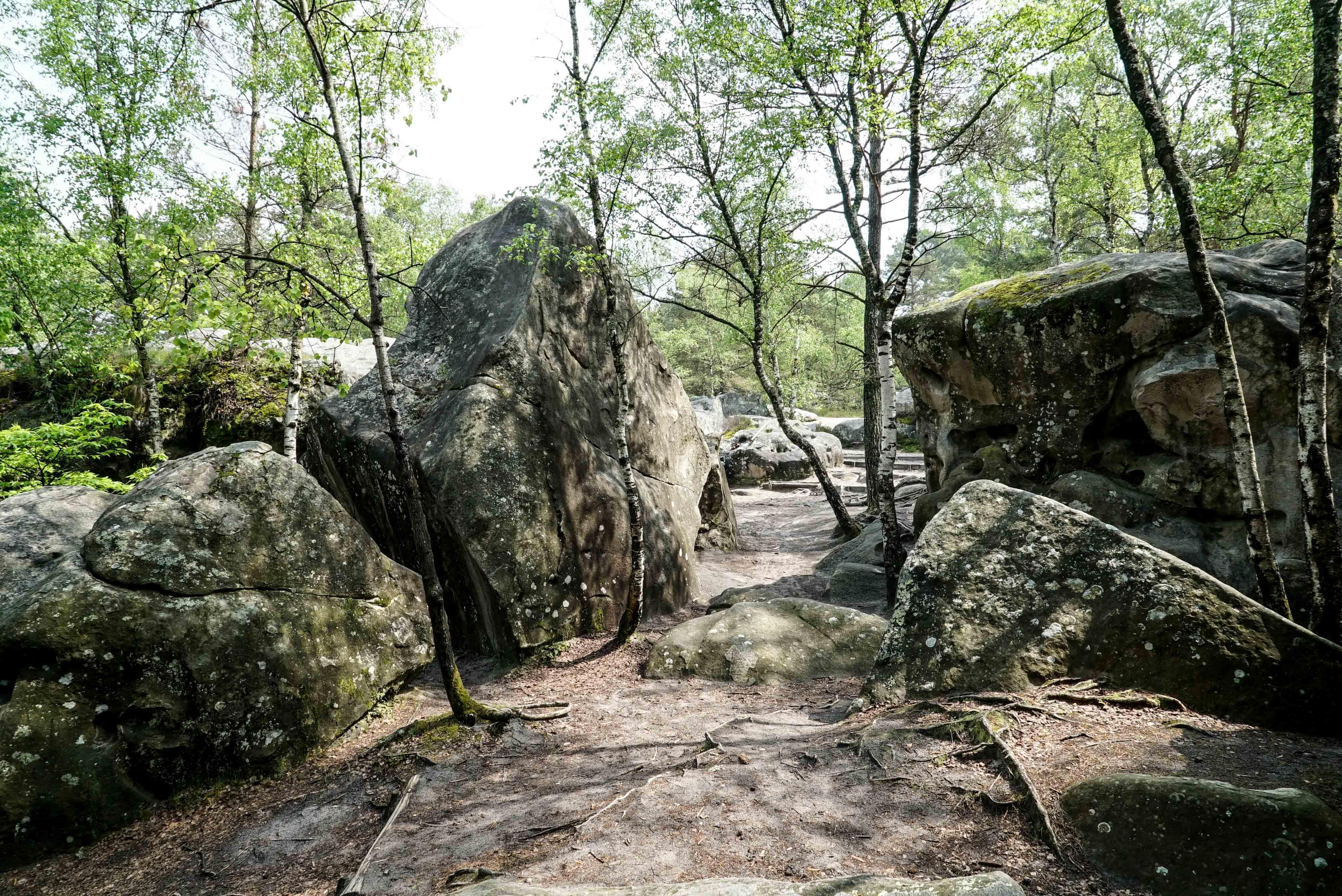 fontainbleau climbing 2016 mike brindley-67