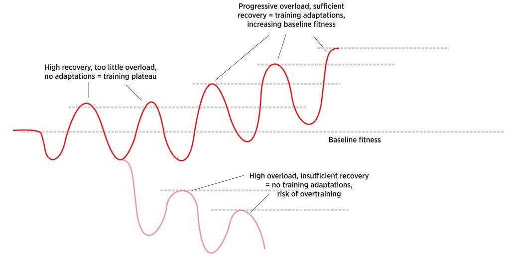Eine zu kurze Regeneration lässt einen Sportler auf der Stelle treten. Zuviel Erholung hingegen hindert den Fahrer daran, dass Maximum aus seinem Training herauszuholen.