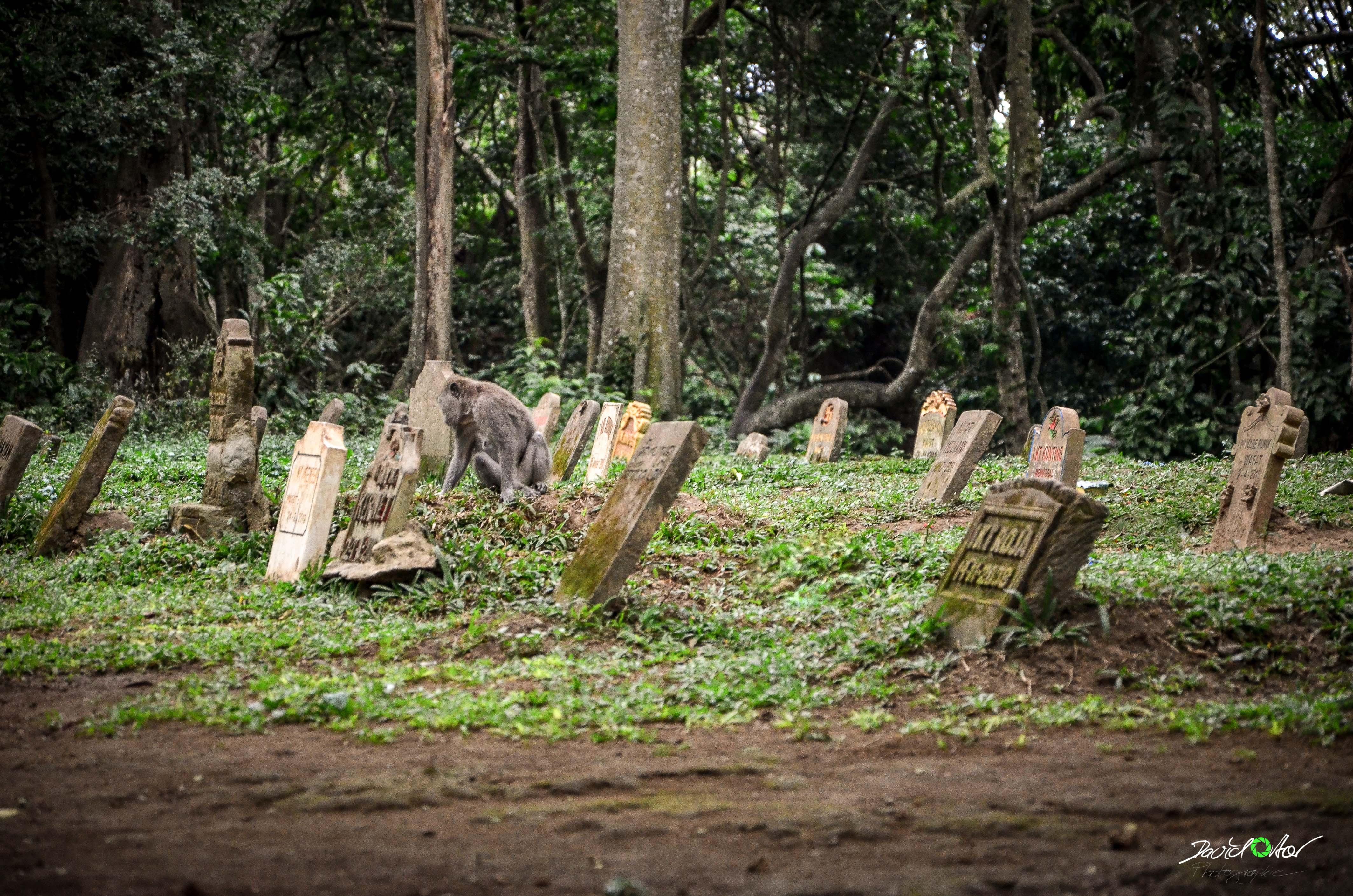 Friedhof Ubud Affenwald